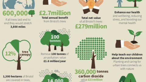 How much?  The value of Bristol's trees